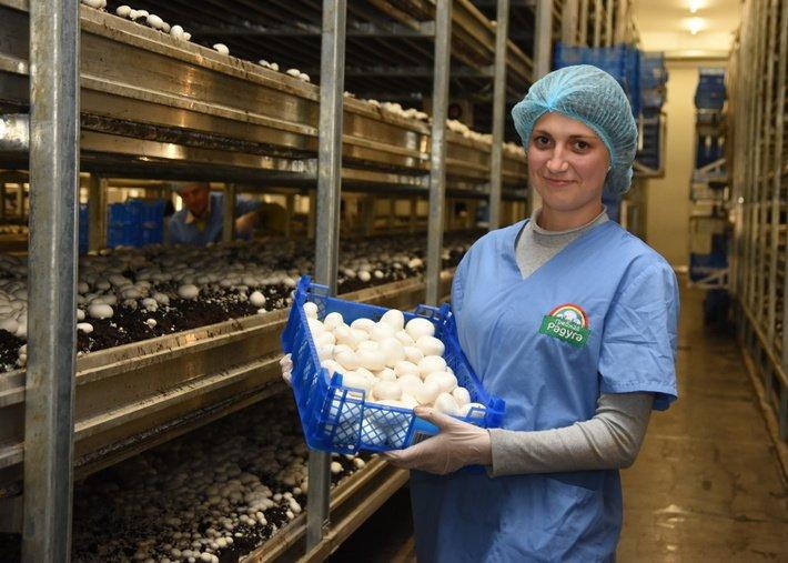 Предприятия по выращиванию грибов в 134